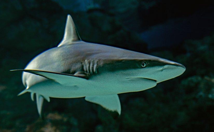 למה התקפות כריש לאחשובות?