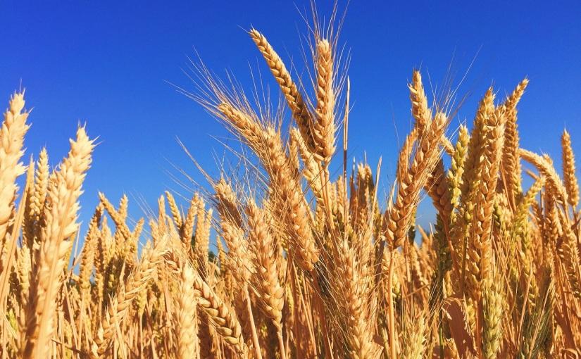 סימון מזון מהונדס גנטית – איך לבלבל אתהציבור