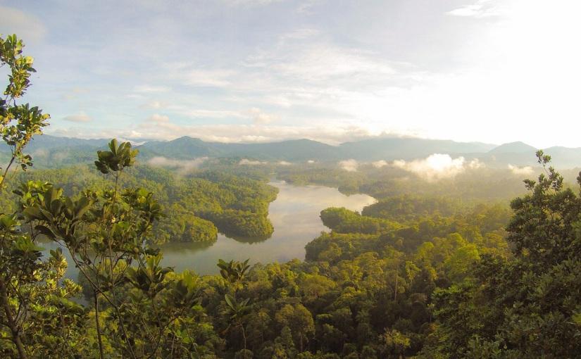 איך להציל את יערות הגשםבברזיל?
