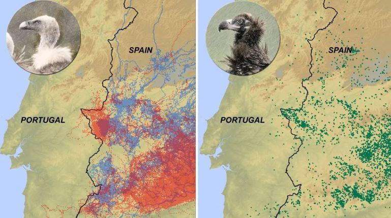 למה הנשרים לא חוצים את הגבוללפורטוגל?